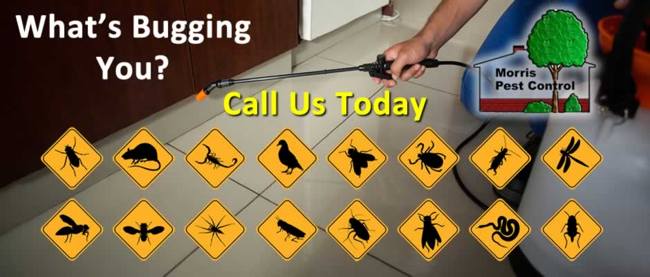 What's Bugging You? Call Us Today
